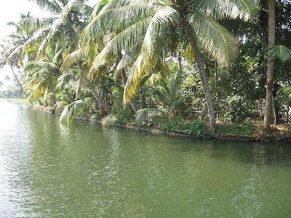800px-Kerala_Backwaters_Kuttanad