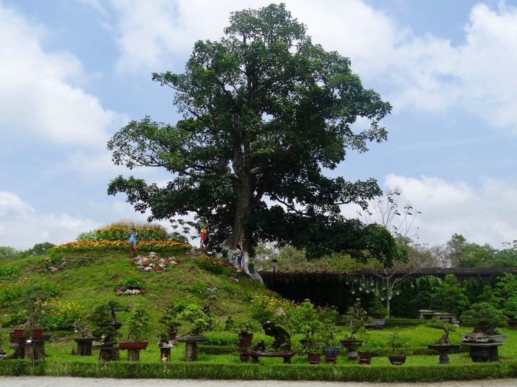 beautiful bonsai garden The Imperial City Hue Vietnam