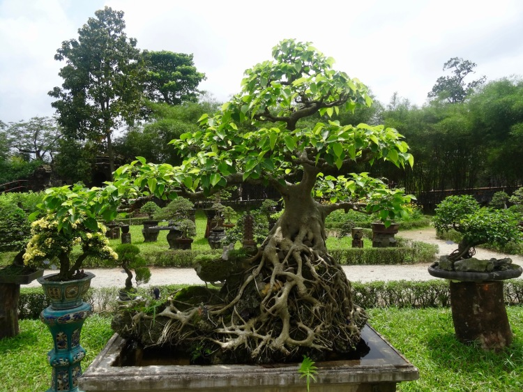 Bonsai exhibition garden The Imperial City Hue vietnam