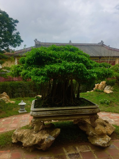 Bonsai Royal Gardens Imperial City Hue Vietnam