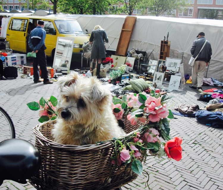 Waterlooplein Flea Market Amsterdam The Netherlands