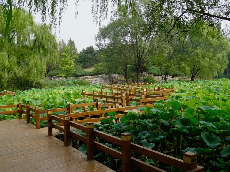 Ecological valley Chaoyang Park