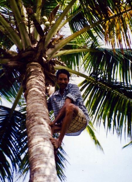Coconut tree Kerala backwaters cruise India