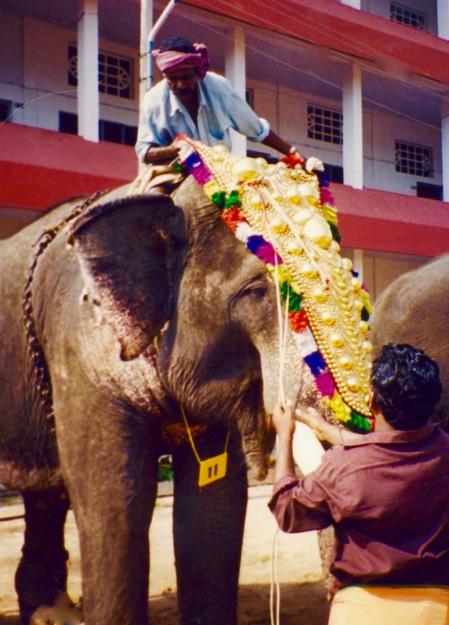 Kodanad Elephant Sanctuary Kerala India