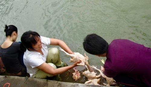 Locals gutting chickens in The Li River Yangshuo Guangxi China