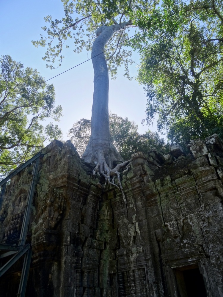 Ta Prohm Temple Angkor Siem Reap Cambodia