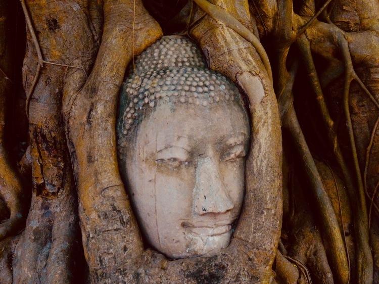 tangled buddha head tree Wat Phra Mahathat Ayutthaya Historical Park