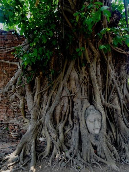 Buddha head in tree roots Wat Mahathat Ayuthaya Historical Park