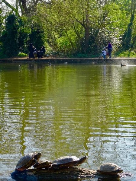 Lake turtles Tooting Bec Common London.