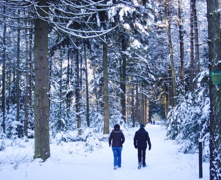Christmas Day at Gorp en Roovert Forest The Netherlands.
