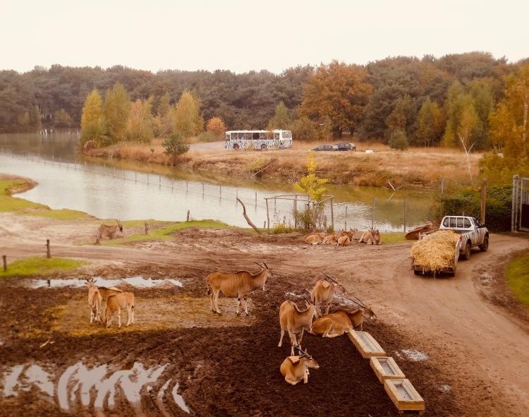 Visit Beekse Bergen Safari Park The Netherlands.