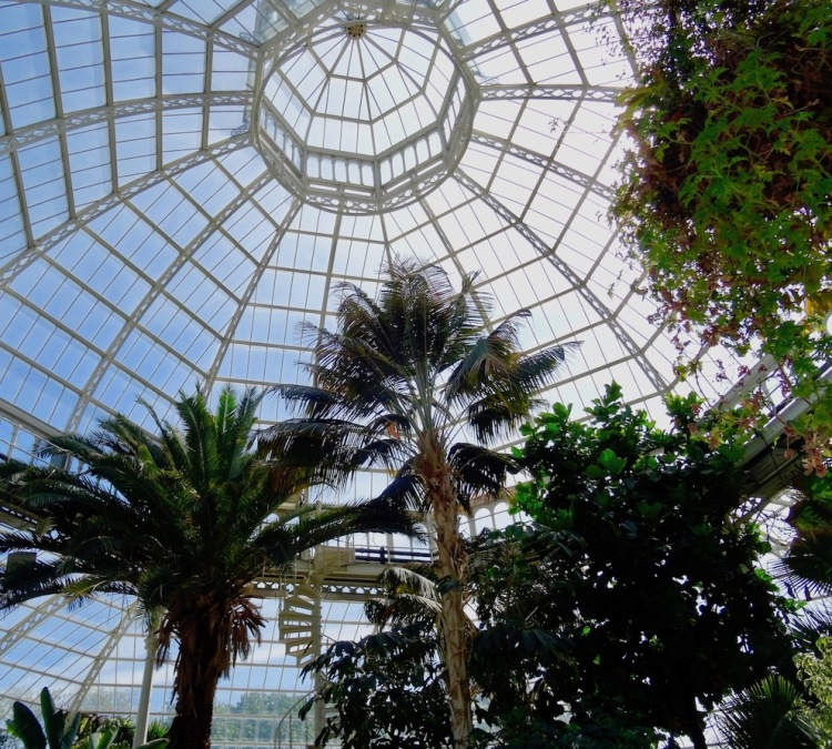 Beautiful glass ceiling at Palm House Sefton Park Liverpool.