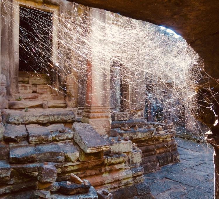 Giant cobweb Bayon Temple Angkor Cambodia